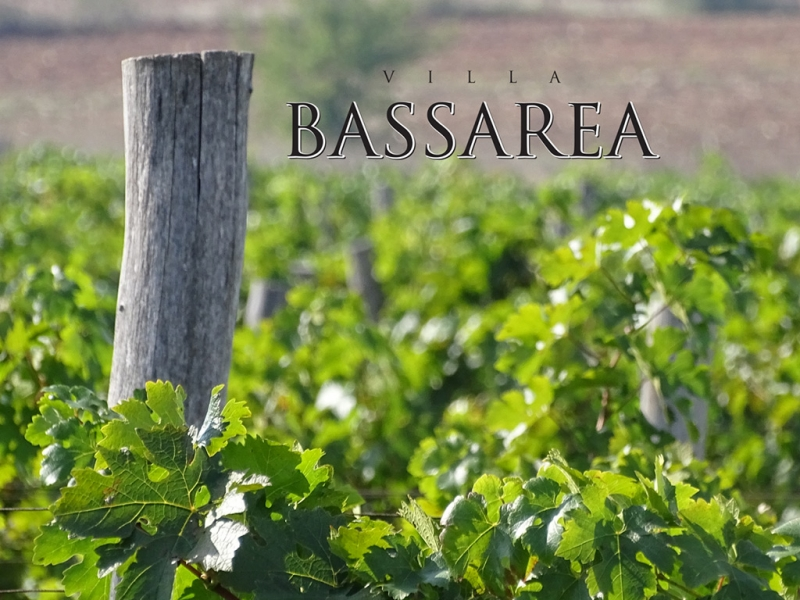 Villa Bassarea Winery